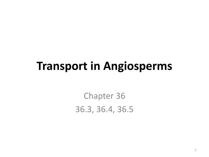 transport in angiosperms n.