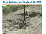 root architecture study sjr nwr