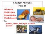 kingdom animalia page 16