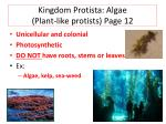kingdom protista algae plant like protists page 12