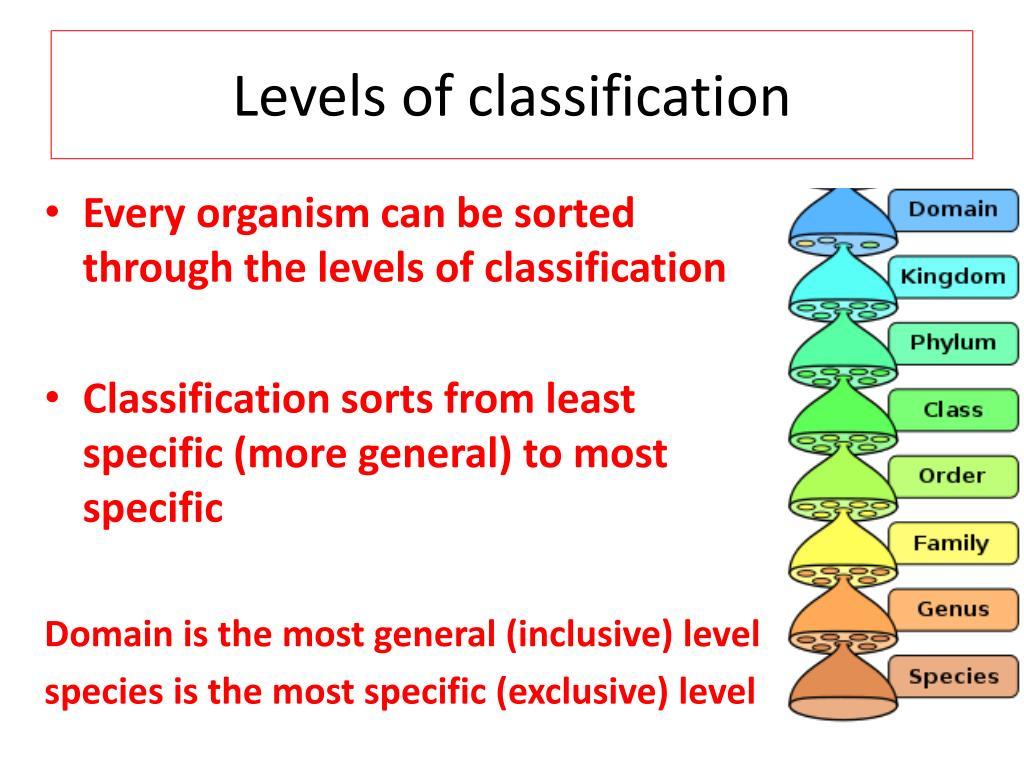six kingdom classification - HD1024×768