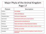 major phyla of the animal kingdom page 17