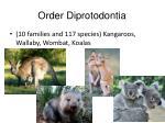 order diprotodontia
