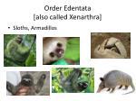 order edentata also called xenarthra