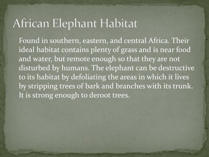 African Elephant Habitat