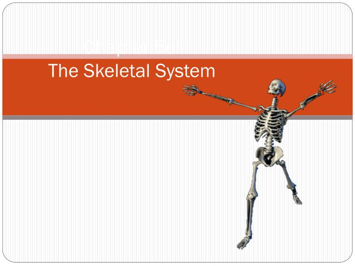 chapter 5e the skeletal system n.