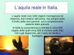 l aquila reale in italia