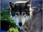 origini del lupo in italia