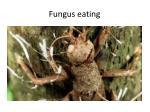 fungus eating1