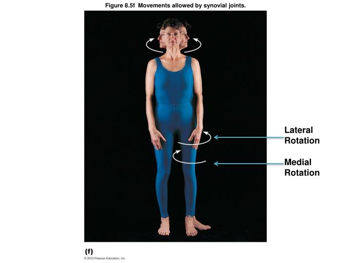 Figure 8.5f  Movements allowed by synovial joints.