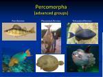 percomorpha advanced groups1