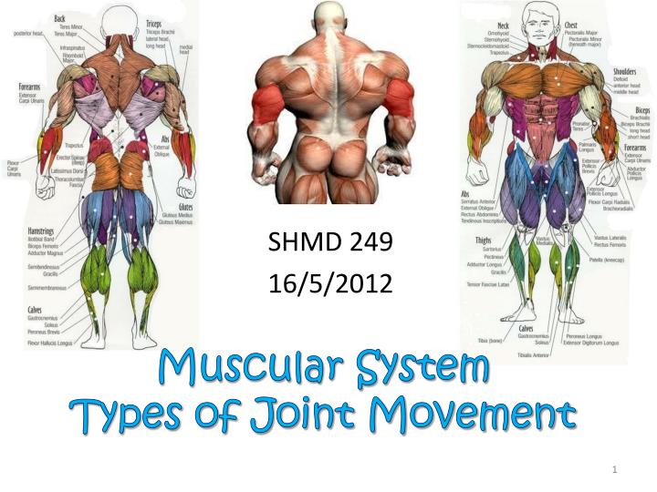 muscular system types of joint movement n.