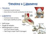 tendons ligaments