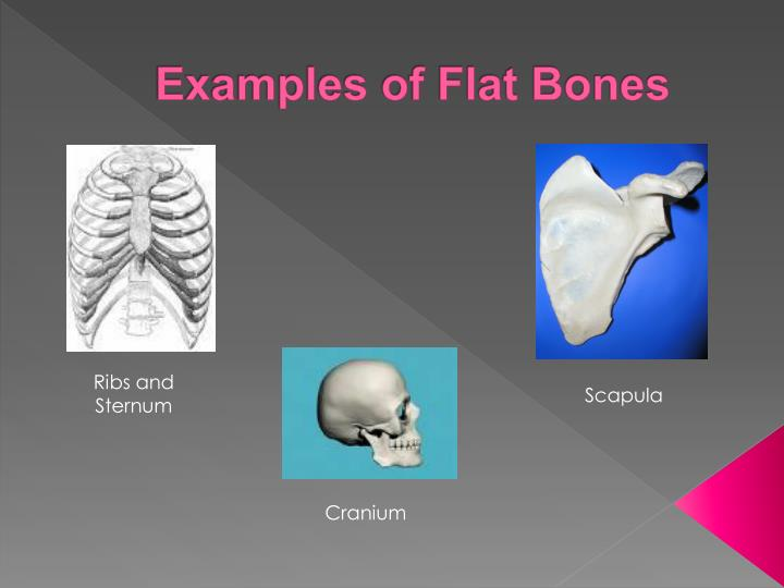 Ppt Anatomy And Physiology Of The Skeletal System Powerpoint