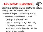 bone growth ossification