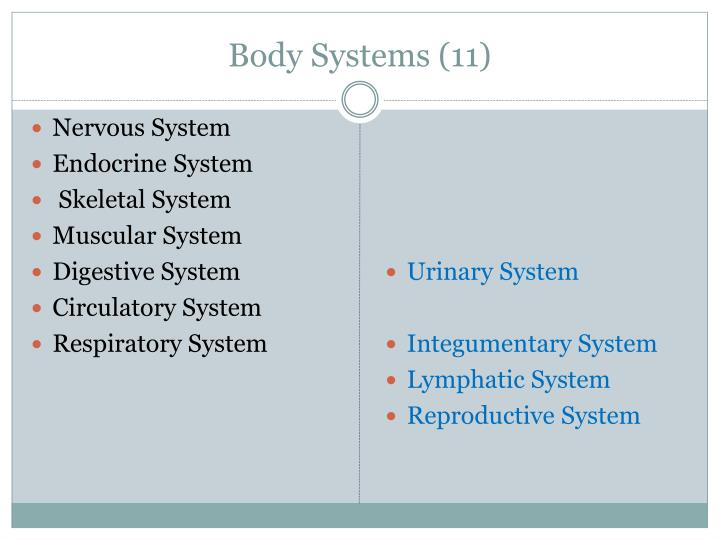 Body systems 11