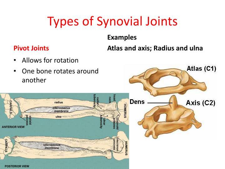 Ppt Jointarticulation Powerpoint Presentation Id2109429