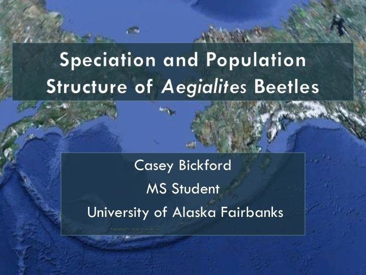 speciation and population structure of aegialites beetles n.