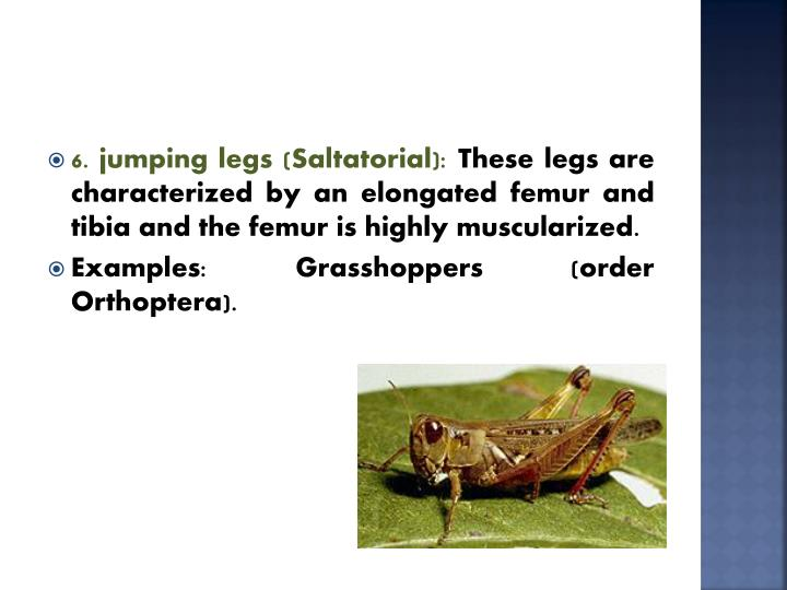 6. jumping legs (