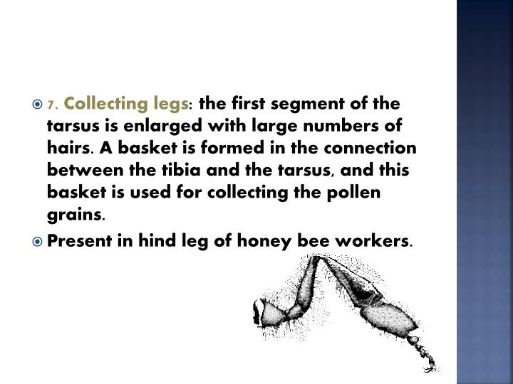 7. Collecting legs