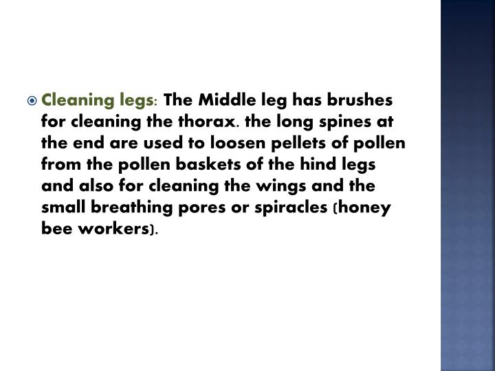 Cleaning legs