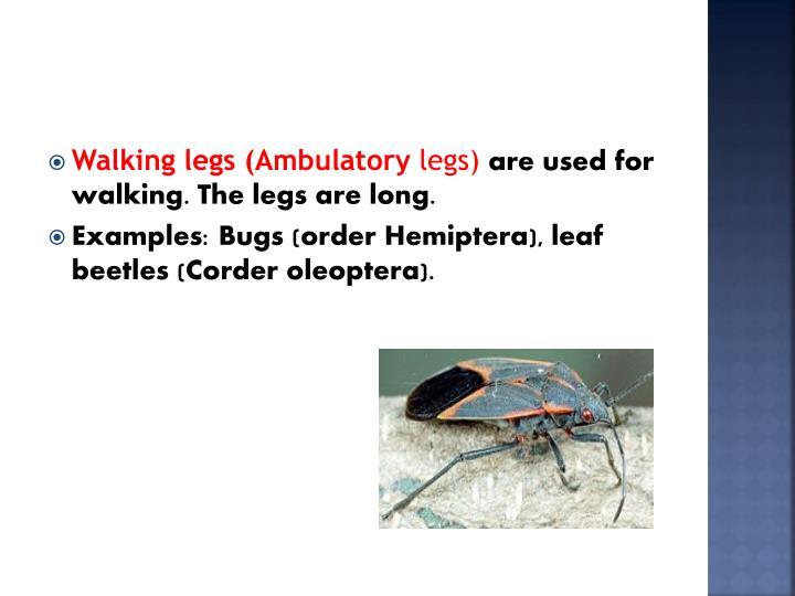 Walking legs (Ambulatory
