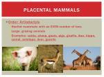 placental mammals12