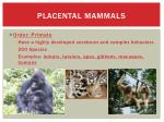 placental mammals14