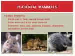 placental mammals3