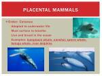 placental mammals7
