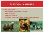 placental mammals9
