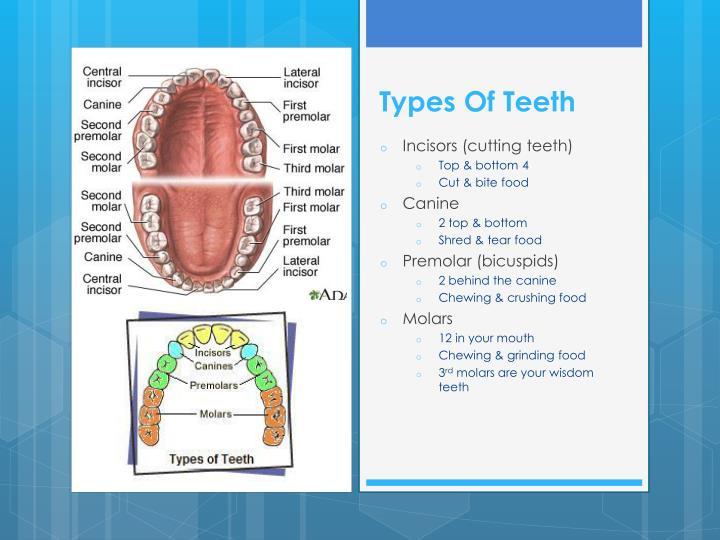 Ppt Dental Hygienist Powerpoint Presentation Id 2109650