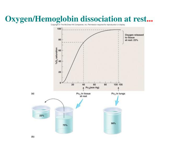 Oxygen/Hemoglobin dissociation at rest