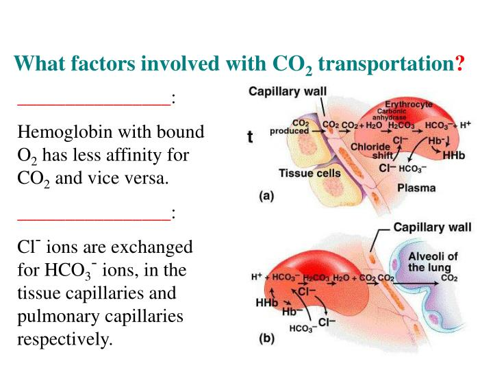 What factors involved with CO
