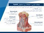 hyoid2