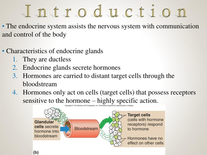 Ppt Endocrine System Powerpoint Presentation Id2109764