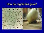 how do organisms grow