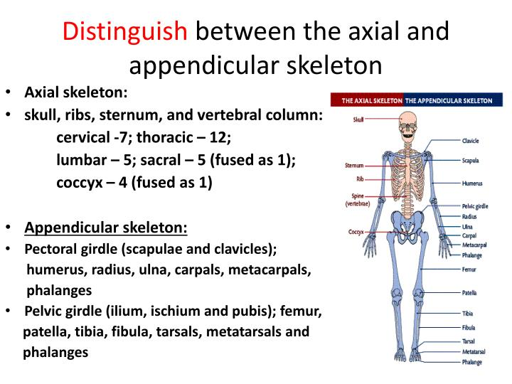 Ppt Sehs Topic 1 Anatomy Powerpoint Presentation Id2109834