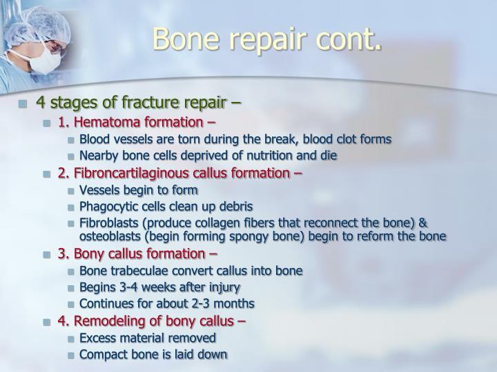 Bone repair cont.
