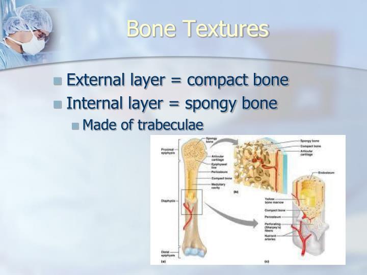 Bone Textures