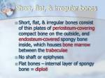 short flat irregular bones