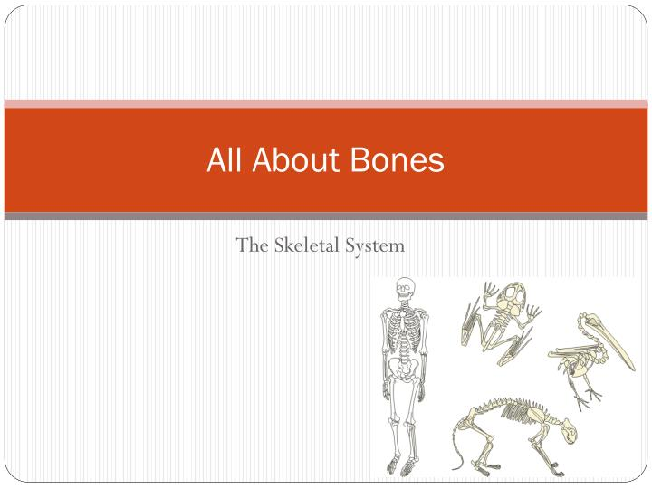 all about bones n.