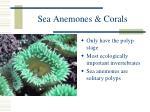 sea anemones corals