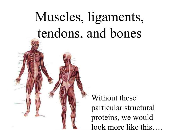 Muscles, ligaments, tendons, and bones