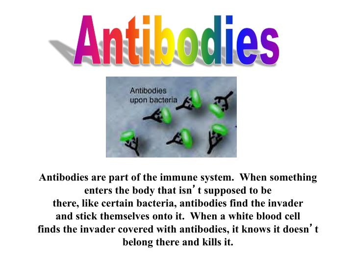 Antibodies are part of the immune system.  When something enters the body that isn