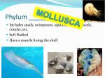 phylum2