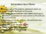 secondary lens fibres