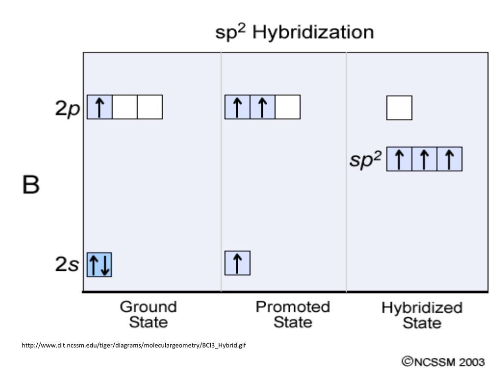 Ppt - Hybridization Powerpoint Presentation  Free Download