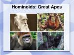 hominoids great apes