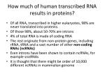 how much of human transcribed rna results in proteins
